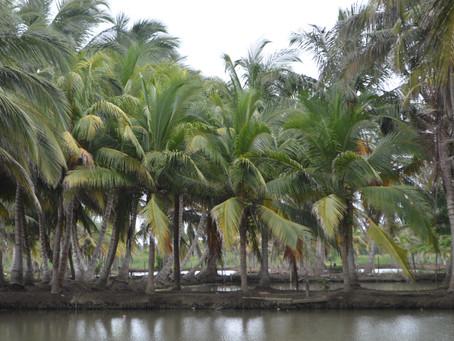 Ganadería, cultivos ilícitos y palma de aceite, las causas de la deforestación en el Caribe