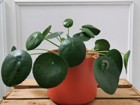 Preparing your house plants for winter