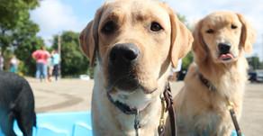 Dog Summer Safety Tips