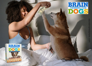 Brain Training for Dogs Review - Will it Helpful for Dogs?