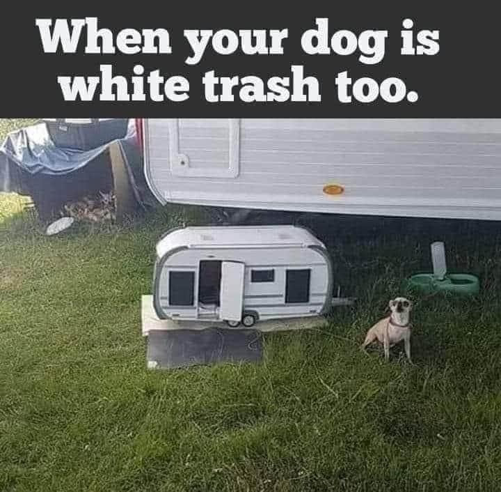 When Your Dog is White Trash Too