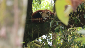 Beyond the Imagination: Zoos in Conservation Chapter 1: The Hope for Nature
