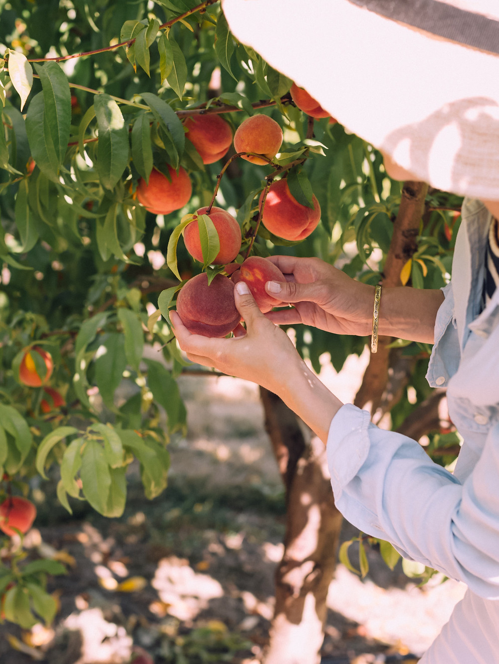 Claire Kariya picking peaches.