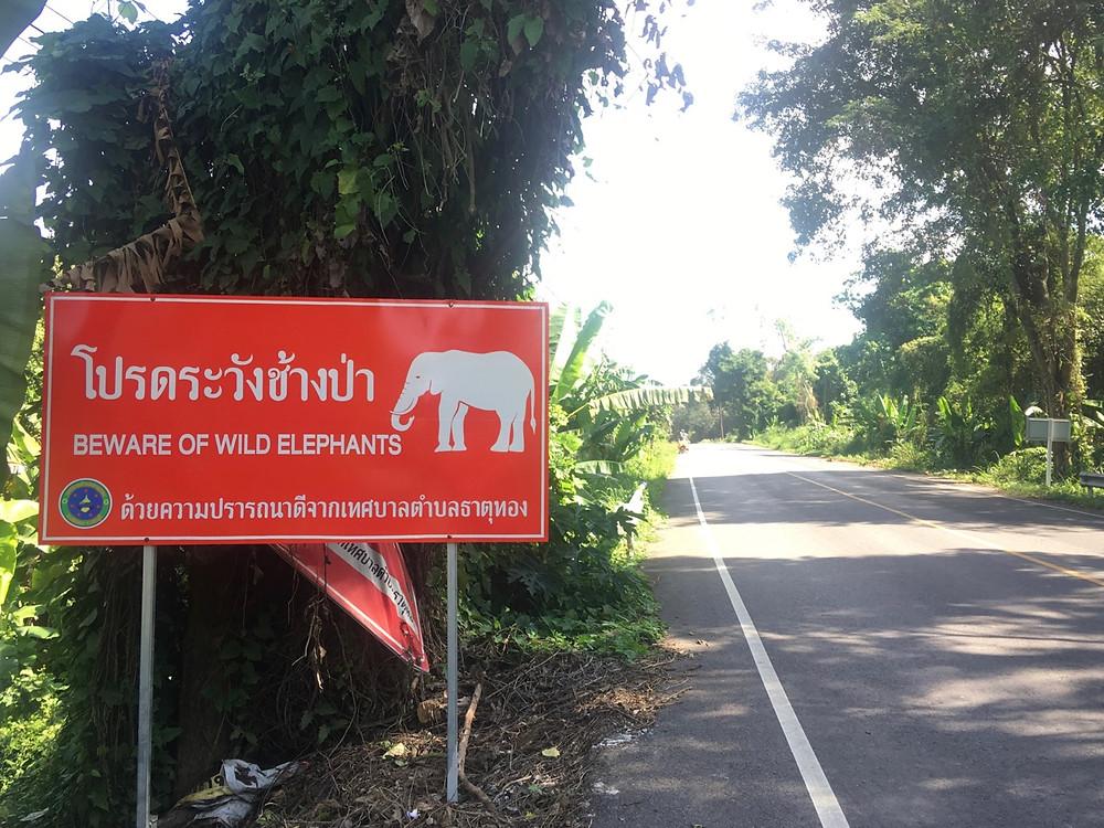 Tour du monde à vélo en famille 2018 - 2019 : Risque éléphants sur la route