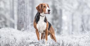 Koiravalokuvaajan kohtaamisia - Suomen kansallisaarteita