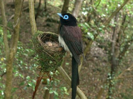 숲길의 요정으로 뽐내는 긴꼬리딱새