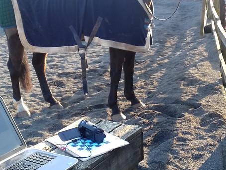 Horses and computers?