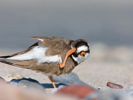 Happy Thanksgiving to the World Shorebirds Day Family