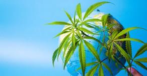 Cannabis alrededor del mundo