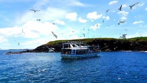 2021澎湖深度東海一日遊 | 撒野旅店