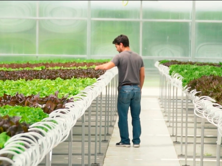 How Hydroponic Farming Is Changing the World For the Better
