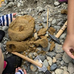 和泉多摩川で化石を発掘!