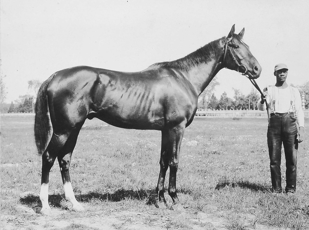 Racehorse Domino, a 19th century sprinter. Sire of Cap And Bells, Commando, and Disguise.
