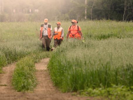 Les yeux sur l'horizon ou l'importance des clubs de chien de chasse.