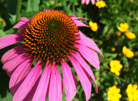 The Dirt on Pollinator Plants