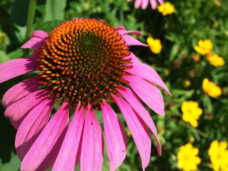 The Dirt on Pollinator Plants
