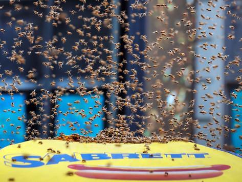 Bees Take New York