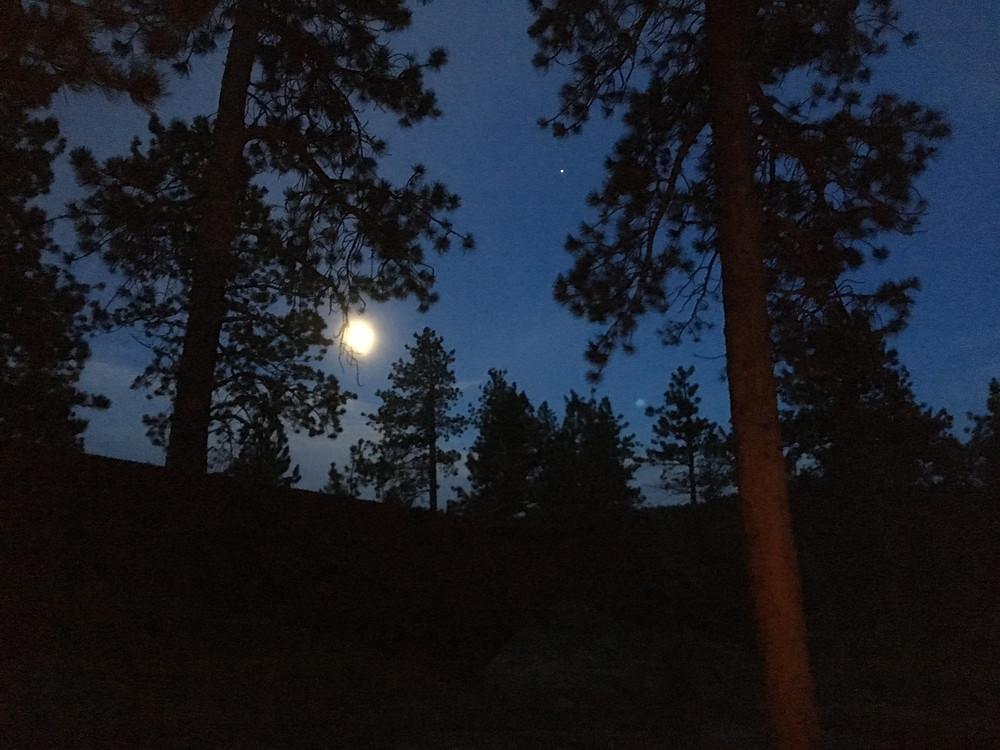 Full Moon & Jupiter behind trees