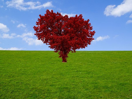 From the Heart: Meeting in the Field