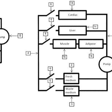 Patent Analysis: Fork and Goode's Novel Bioreactor System