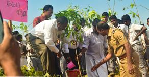 Tree Plantation 2020