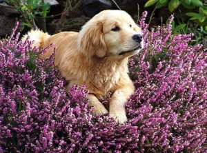 6 Ways To Improve Your Pet's Life With Authentic Essential Oils
