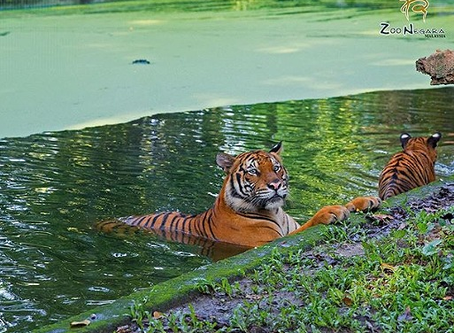 Show some love to our furry friends at Zoo Negara