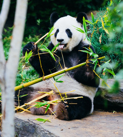 Take a virtual trip to the zoo