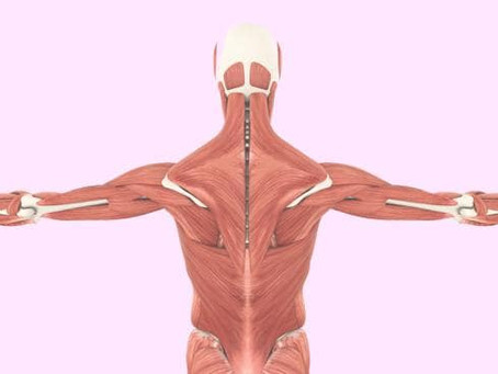 Fascia, Inflammation and Pain - what you need to know to get out of pain faster.
