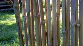 Au creux du bambou
