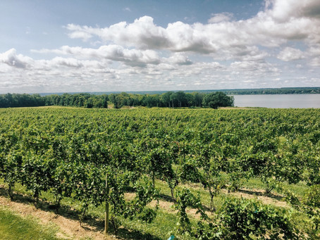 The Spring Trip Every New York Wine Addict Should Be Planning Right Now