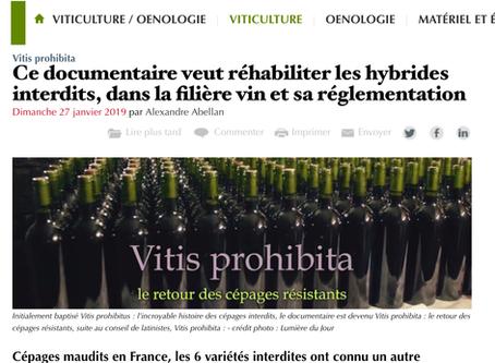 Vitisphère - Ce documentaire veut réhabiliter les hybrides interdits, dans la filière vin et sa r...