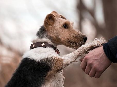 Pourquoi vivre une relation bienveillante avec son chien ?
