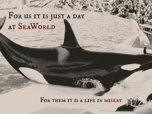 SeaWorld MUST Be Stopped