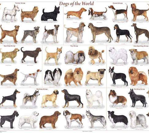 How Many Dog Breeds Are There?