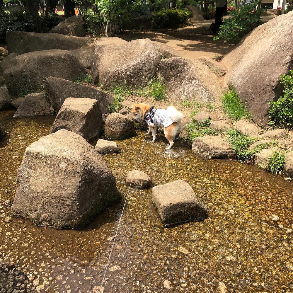 蕨市民公園にて水遊び