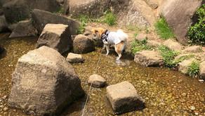 大キライだった水遊び(埼玉県蕨市)