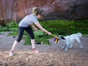 #Edublog: Giocare è fondamentale per il nostro cane?