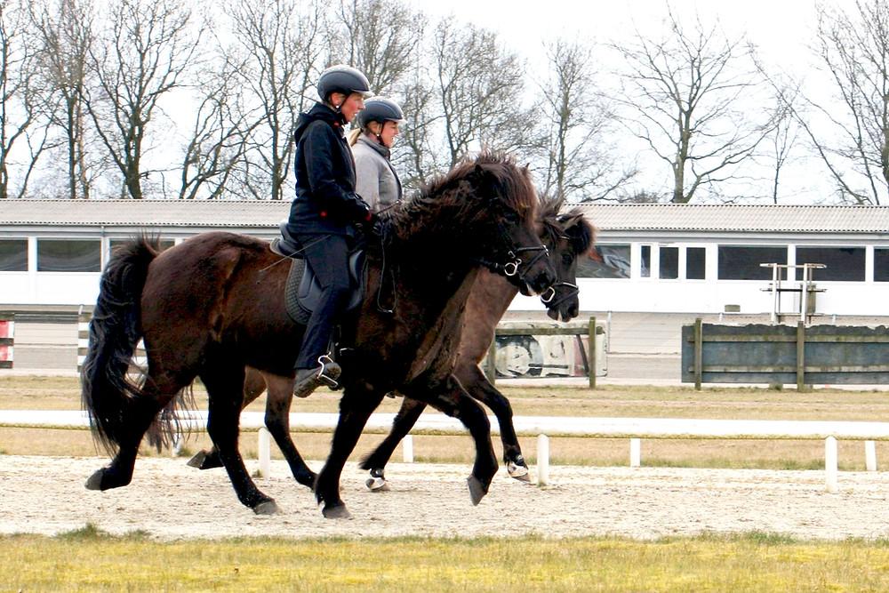 Islandske heste på Skive Travbane