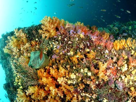 다이빙을 잘 즐긴다는 것은 무엇인가..   (부제 : 우리 바다 다이빙하기..)
