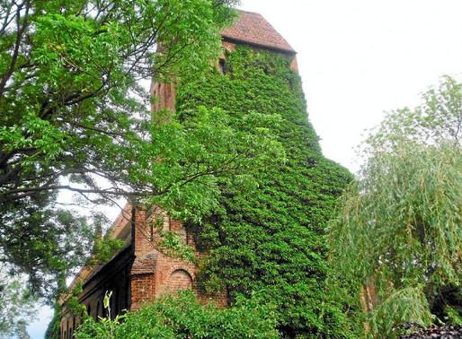 Der prächtige Efeu vor gotischer Fassade   - Pro und Contra - oder von beiden ein bisschen?