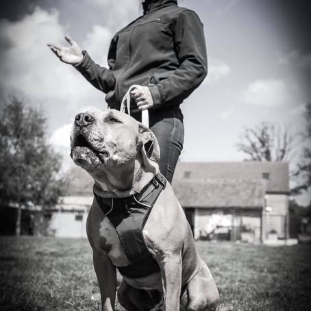 Halko, un chien unique.