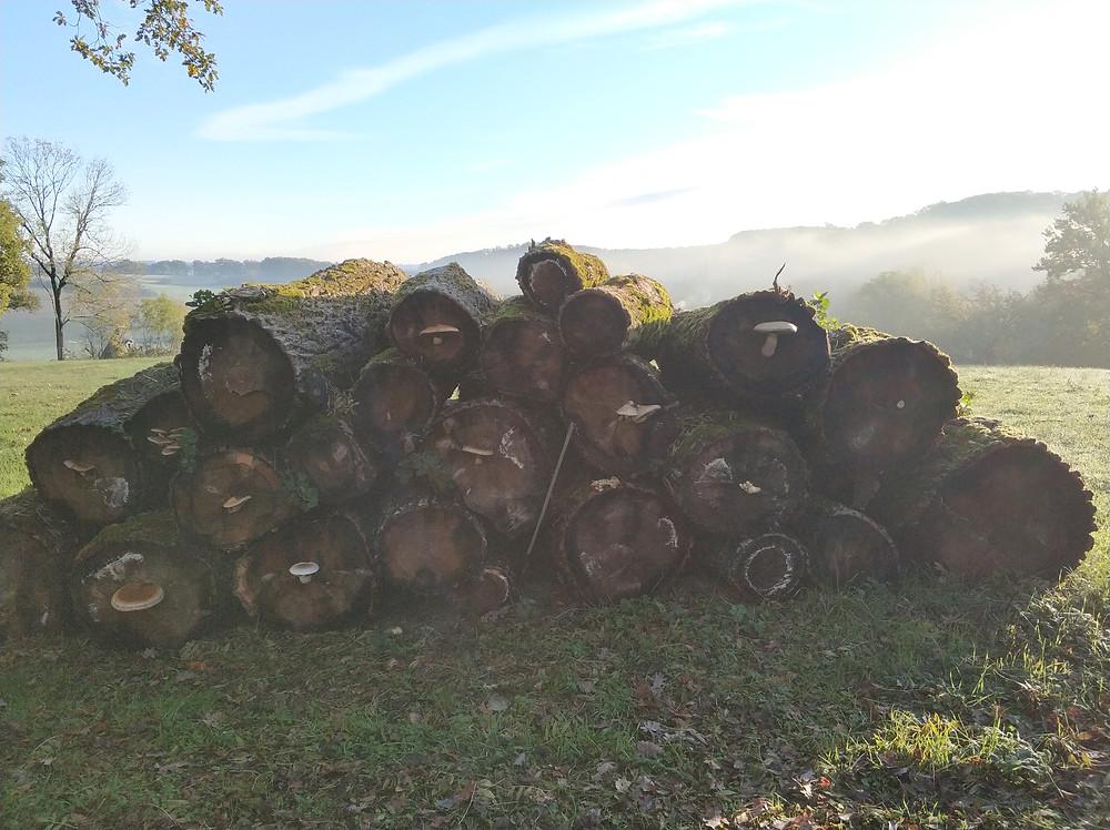 logs and fungi