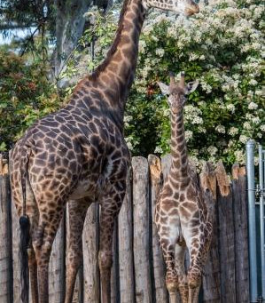 Fun With Mindfulness...At the Zoo  (Walking Meditation)