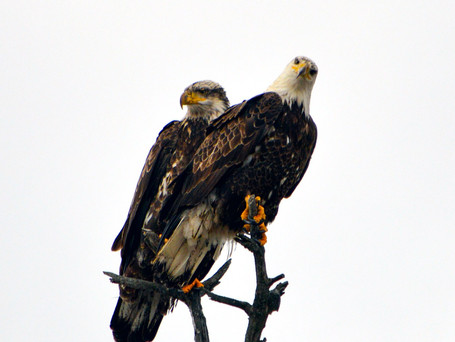 In Love with Eagles