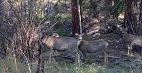 Colorado Trail - Day 13