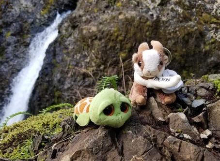 Mud, Moss, and Mindfulness…