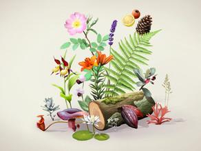 Mister Botanique: L'évolution des plantes