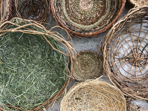 My favourite plants to use in basketry