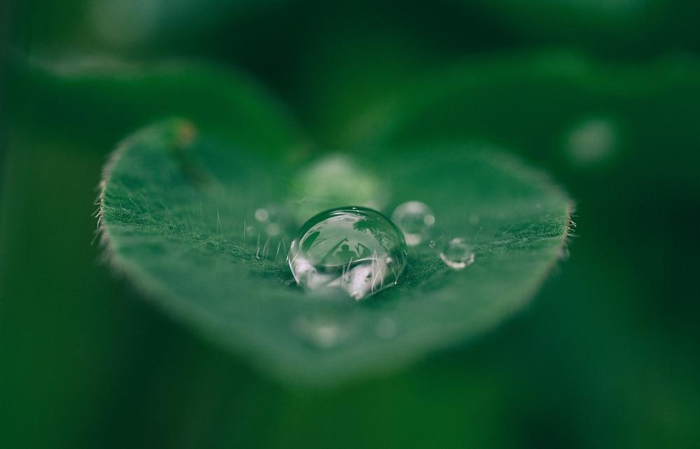 Raindrop of leaf